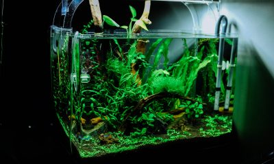 aspirateur-d-aquarium