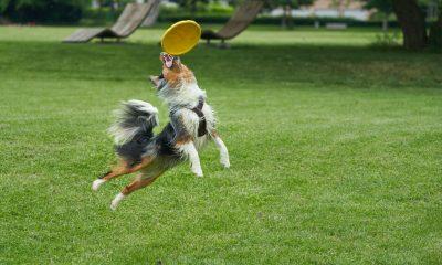 meilleures-idees-jeux-offrir-chien